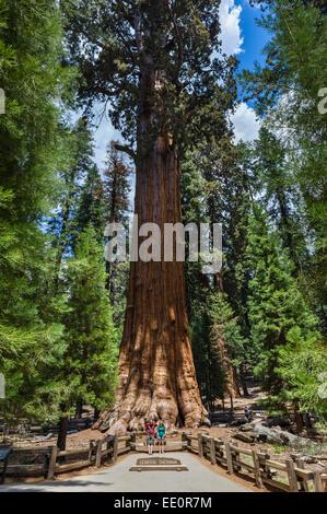Touristen posieren vor dem General Sherman Tree, eines der größten in der Welt, Sequoia Nationalpark, Kalifornien, - Stockfoto