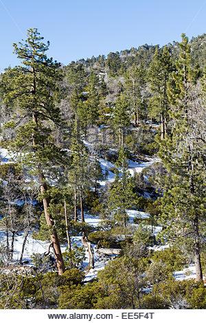 Blick auf schneebedeckter Berg mit Bäumen an Lake Arrowhead - USA - Kalifornien - Stockfoto