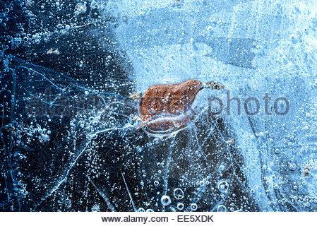 Blatt-gefangen im Eis - Stockfoto
