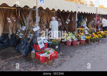 Verkauf von Sämlingen auf dem traditionellen Bauernmarkt - Stockfoto