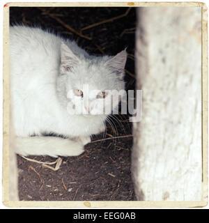 Weiße Katze sitzt unter dem Tisch - Stockfoto