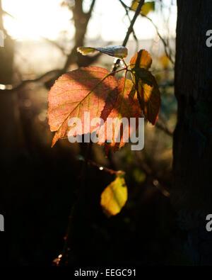 Sonnendurchflutete Blätter auf dem Lande - Stockfoto