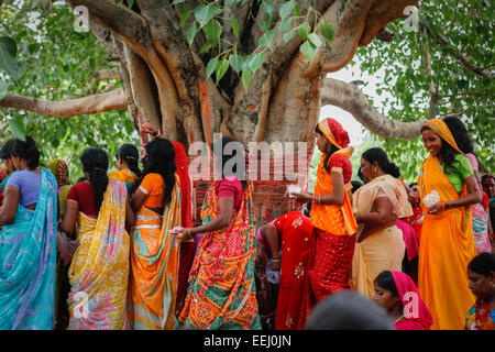 Frauen umschließen Heilige Bodhi-Baum in Lakshmi Narayan-Tempel-Komplex in Rajgir. - Stockfoto
