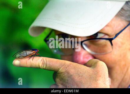 CT USA – Judy Preston von alten Saybrook befasst sich mit einer Zikade auf Treibholz Lane in North Branford, wo - Stockfoto