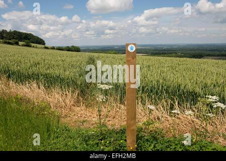 Fußweg unterzeichnen und öffentlichen Fußweg Schnitt durch die Mitte eines Weizen in grünen unreifen Ohr. Schönen - Stockfoto