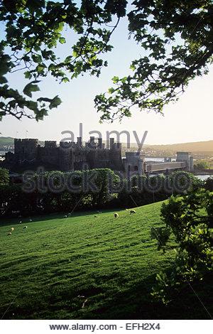 Conwy Castle, Wales - Stockfoto