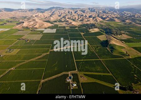 Luftaufnahme der Weinberge im Tal des Wairau, Marlborough Anbaugebiet, Blenheim, Marlborough, Südinsel, Neuseeland - Stockfoto