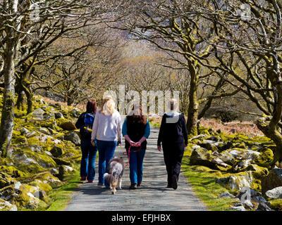 Vier Frauen mit einem Hund, einem Land genießen Fuß in Frühlingssonne am Carreg Y Saeth in Gwynedd Snowdonia North - Stockfoto