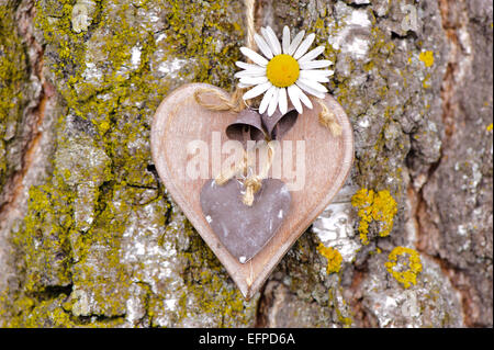 Herz auf Baumrinde - Stockfoto