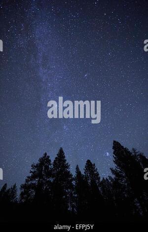 Silhouette Bäume und Sternenhimmel in der Nacht, Diamond Lake, Oregon, USA - Stockfoto