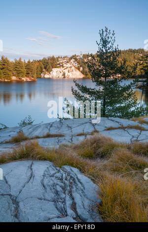 Gräser wachsen aus dem flachen Boden oben auf dem weißen Quarzit-Felsen. Killarney Provincial Park, Ontario, Kanada. - Stockfoto