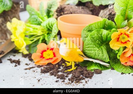 Primula Blumen Blumenerde mit Dekoration Vogel, Töpfe und Boden - Stockfoto