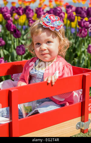 Kleinkind Mädchen im roten Holzwagen in Tulpe Garten in Mount Vernon, Washington, USA - Stockfoto