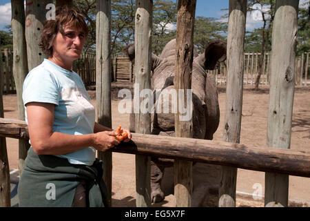 Berry White, eine äußerst erfahrene Nashorn Whisperer und Pfleger, haben die Aufnahme des Nashorns Fortschritte - Stockfoto