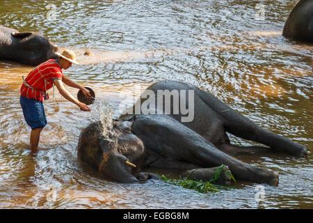Chiang Mai, Thailand - November 16: Mahout nehmen ein Bad Elefant in Wasserstraße am 16. November 2014 im Mae Sa - Stockfoto