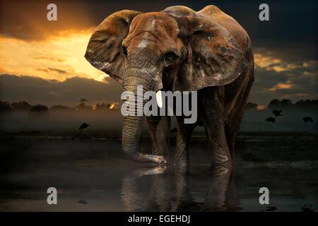 Asiatischer Elefant watet durch Wasser bei Sonnenuntergang - Stockfoto