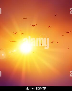 Sommer Sonnenuntergang. Vögel Flug vor die untergehenden Sonne - Stockfoto