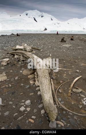 Antarktis, Half Moon ist, Walfang-Geschichte, Wale Kieferknochen am Strand - Stockfoto