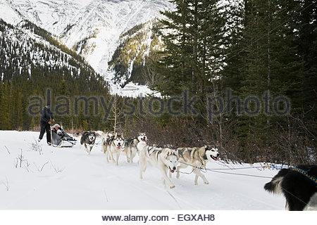 Familie Hundeschlittenfahrten unter schneebedeckten Berg - Stockfoto