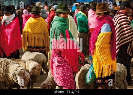 Ecuador, Cotopaxi, Zumbahua, das Dorf von Zumbahua Markttag, Moutouns auf dem Viehmarkt - Stockfoto