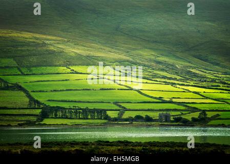 Grüne Felder auf dem Ring of Kerry von Valentia Island, Irland - Stockfoto