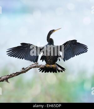 Anhinga Vogel sitzend gegen den Himmel - Stockfoto