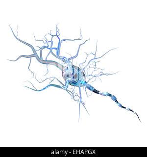 Nervenzellen, Konzept für neurologische Erkrankungen, Tumoren und Gehirn-Chirurgie. - Stockfoto