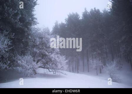 Nebel im Winterwald - Stockfoto