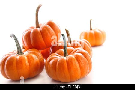 Miniatur-orange Kürbisse gegen weiß - Stockfoto
