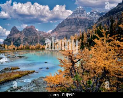 Mt-Huber und Herbst farbige Lärche. Opabin Plateau von British Columbia die kanadischen Rockies und Yoho-Nationalpark. - Stockfoto