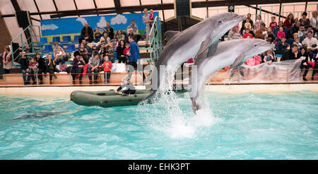 Rostow am Don, Russland - 1. Februar 2015: Dolphin zieht der junge im Boot, das Publikum zu bewundern, was er sah in Rostow dolph