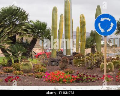 Kreisverkehr mit Verkehrszeichen, Kakteen, Blumen und Palmen Bäume Fuerteventura, Kanarische Inseln-Spanien - Stockfoto