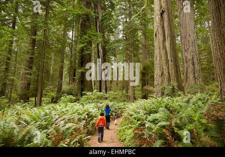 Gemischte Rassen Kinder Wandern im Wald - Stockfoto