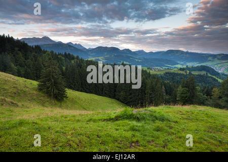 Ansicht, Hundwiler Höhe, Hundwil Höhe, Schweiz, Europa, Kanton Appenzell, Ausserrhoden, Holz, Wald, Fichten, Morgenlicht - Stockfoto