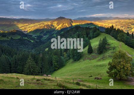 Ansicht, Hundwiler Höhe, Hundwil Höhe, Schweiz, Europa, Kanton Appenzell, Ausserrhoden, Holz, Wald, Fichten, Alp, - Stockfoto