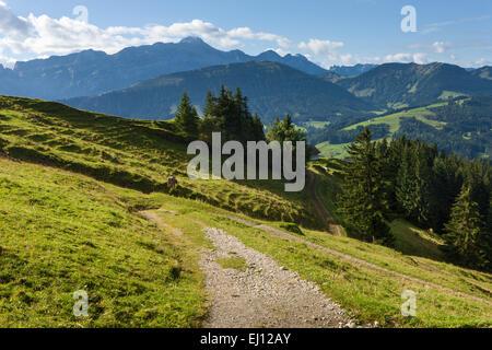 Ansicht, Hundwiler Höhe, Hundwil Höhe, Schweiz, Europa, Kanton Appenzell, Ausserrhoden, Holz, Wald, Fichten, Wanderweg, - Stockfoto
