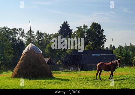 Landschaft im ländlichen Raum. Braune Pferd und Heuhaufen auf der Weide. - Stockfoto