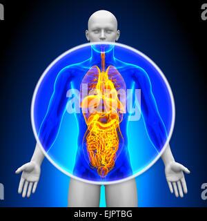 Medizinische Röntgen-Scan - alle Organe - Stockfoto