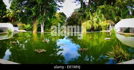 Spanien Kanaren Teneriffa Puerto De La Cruz Botanic Garden Park Jardin Botanico - Stockfoto