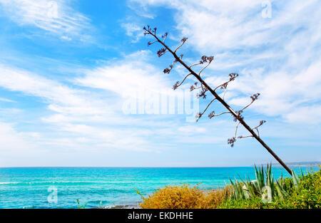 Agave Blume wie mediterrane Landschaft - Stockfoto