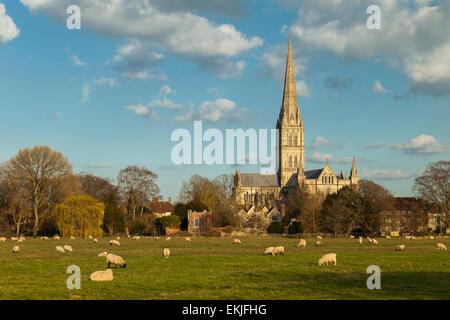 Frühling am Nachmittag an die Kathedrale von Salisbury. - Stockfoto