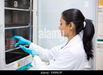 Closeup Portrait, junger Labor Forscher halten Gewebekultur Gerichte im Inkubator. Isolierten Labor Hintergrund - Stockfoto