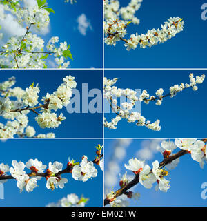 blühende Zweige - Stockfoto