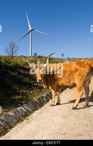 Windpark. Moderne Windmühlen oder Windkraftanlagen in der Landschaft. Strom ist betriebene ökologische und als bett - Stockfoto