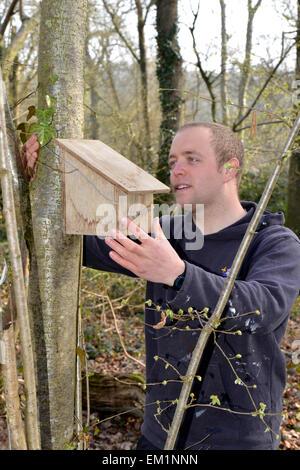 Errichtung Nistkästen für Hazel Dormouse - Muscardinus avellanarius - Stockfoto