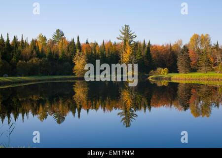Bäume In einem ruhigen Teich spiegelt sich In der früh; Bondville Quebec Kanada - Stockfoto