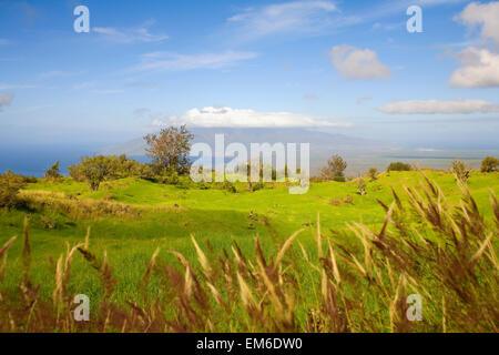 USA, Hawaii Inseln, grüne Weiden mit Blick auf Ozean; Maui, Upcountry Scenic in der Nähe von Ulupalakua - Stockfoto