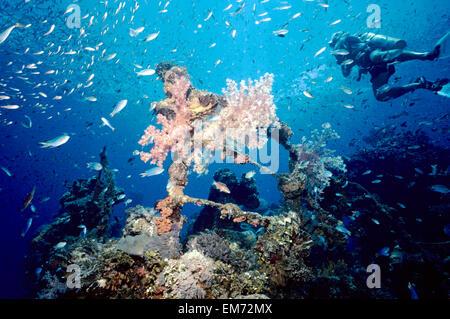 Pazifik, Alcyonarian, blau, Bogen, Chuuk, bunt - Stockfoto