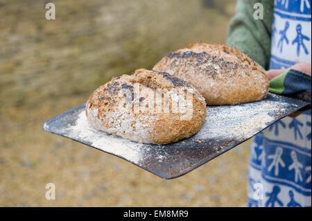 Reifer Mann hält Backblech mit Bio Brote - Stockfoto