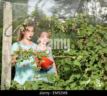 Zwei Schwestern, die Brombeeren pflücken - Stockfoto